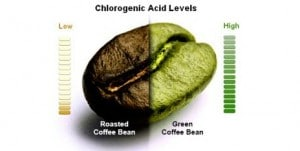 chlorogenic-acid-level-on-green-coffee-bean