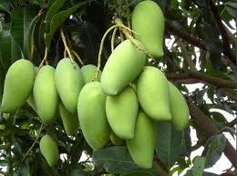 African Bush Mango Effects On Weight Cebm